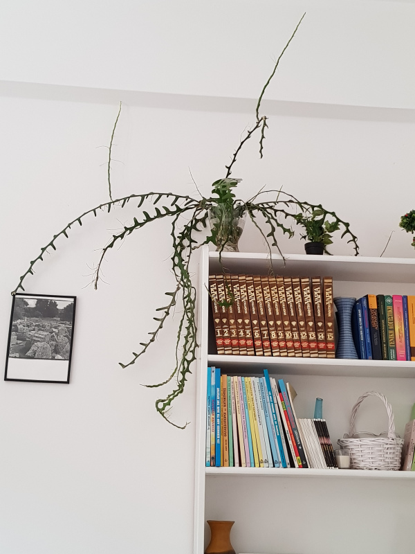 penny-gadd-shelves